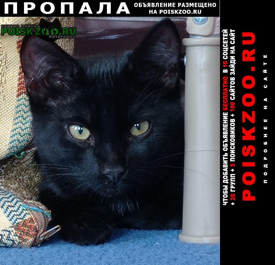 Пропала кошка молодой черный котик. Бор
