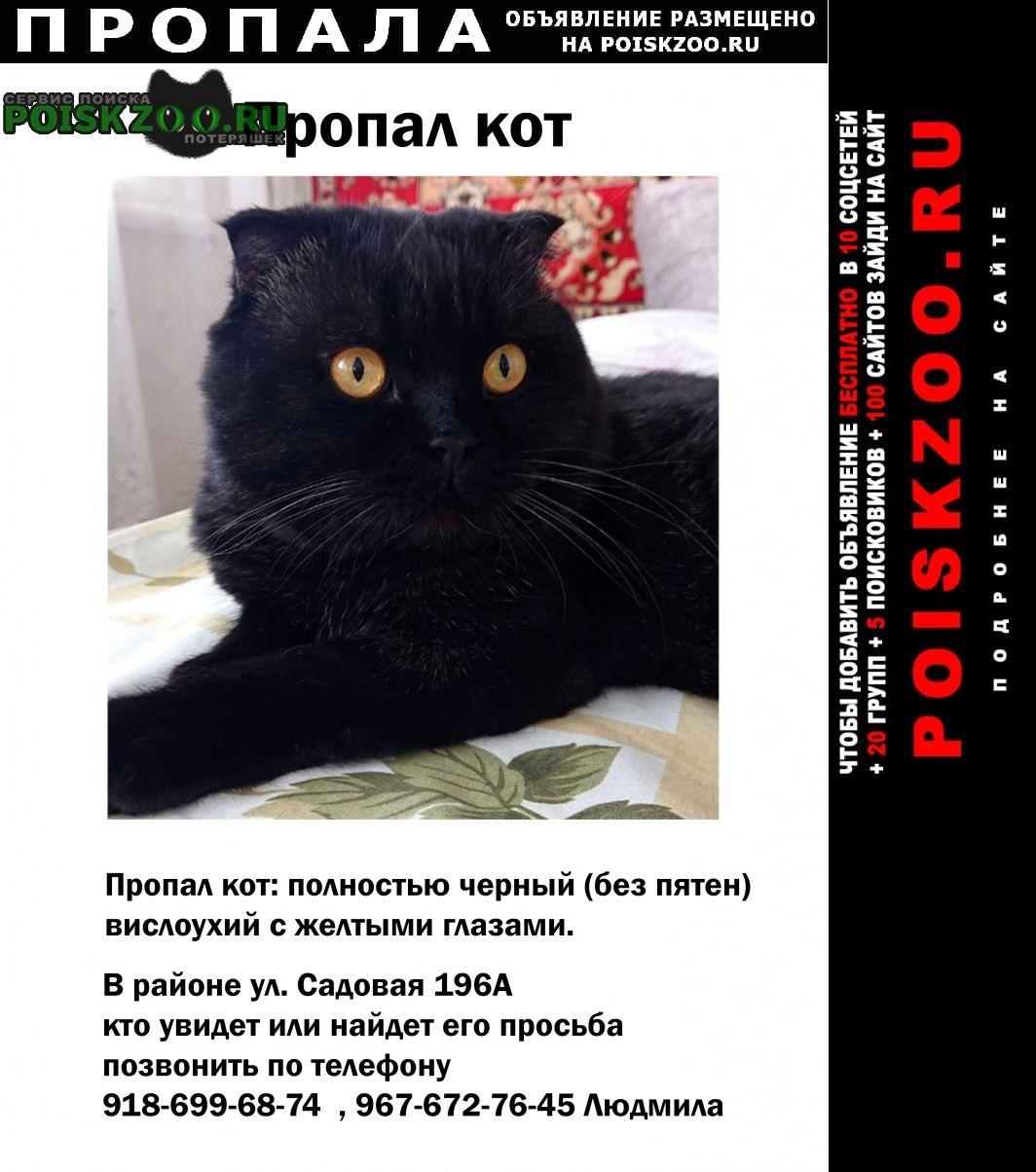 Пропала кошка Усть-Лабинск
