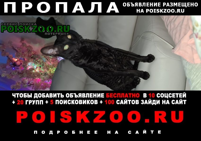 Пропала кошка кот джин Иваново