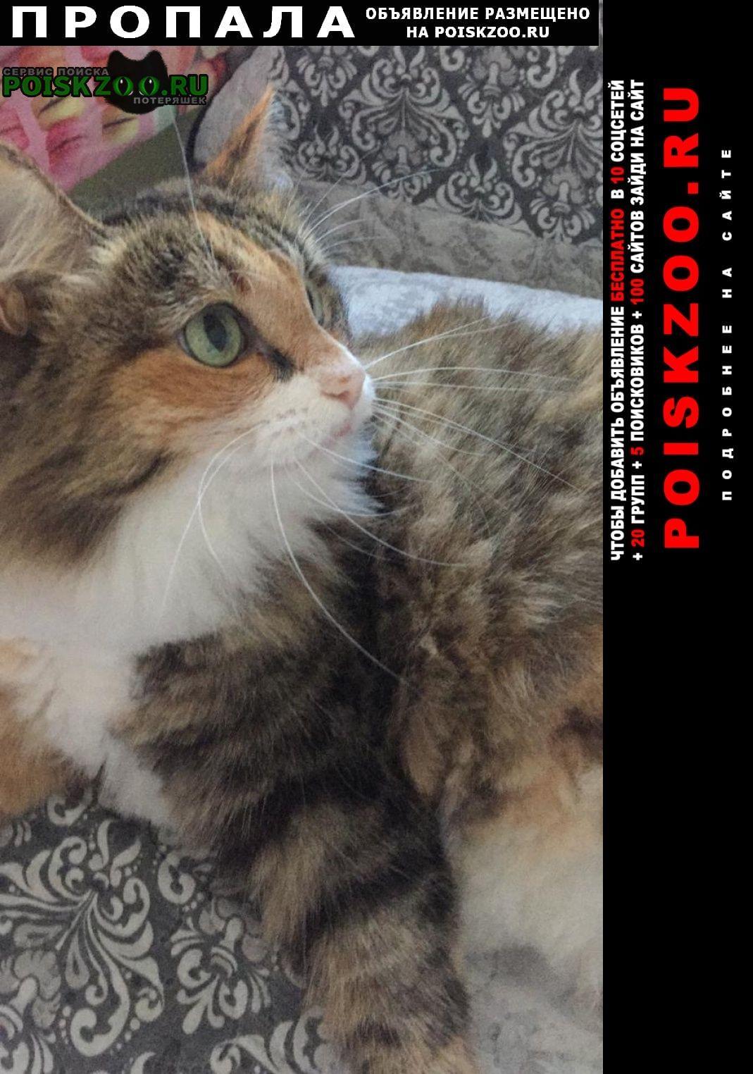 Пропала кошка помогите найти любимую кошку Серпухов