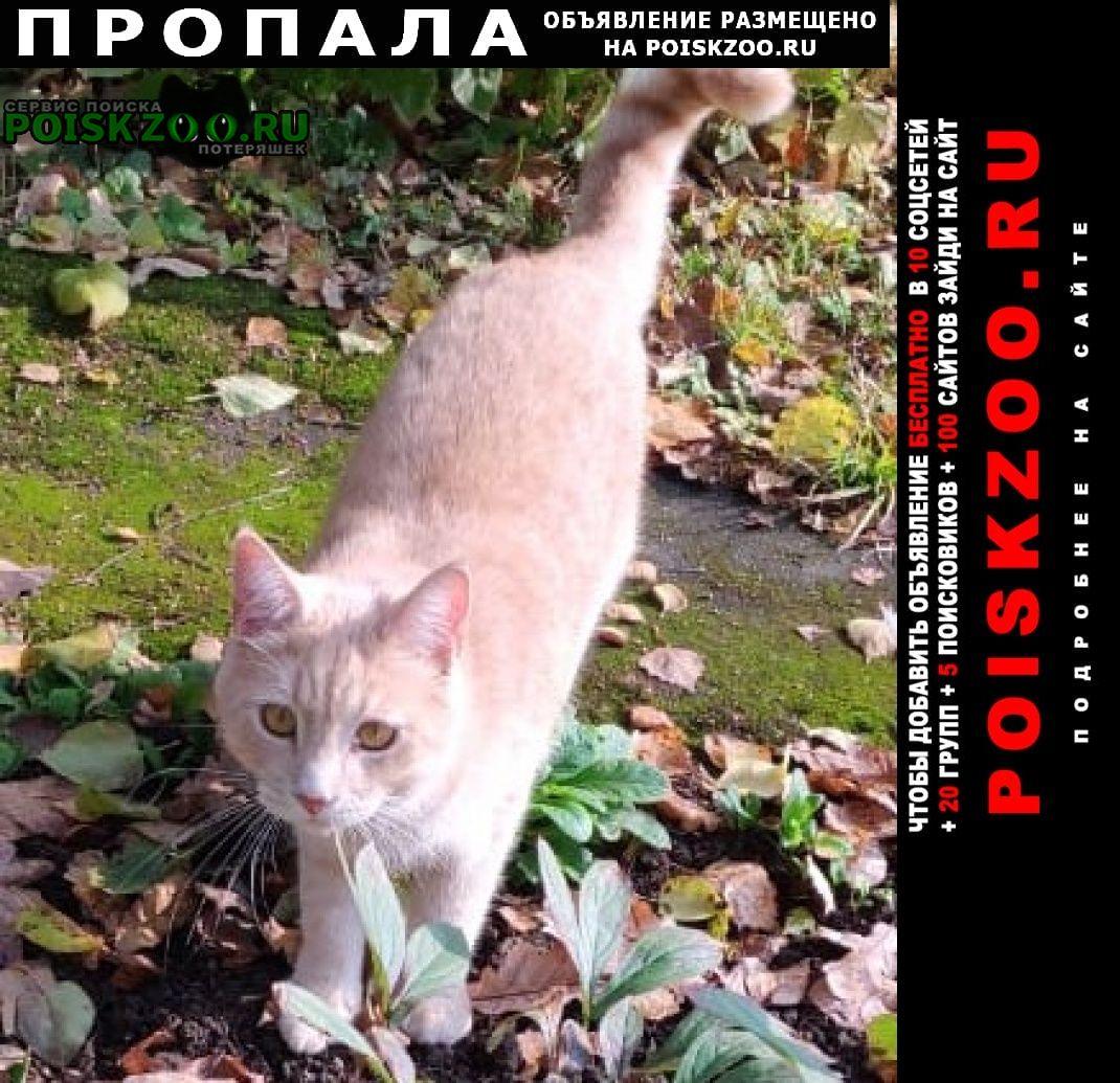 Пропала кошка крупный кот Внуково