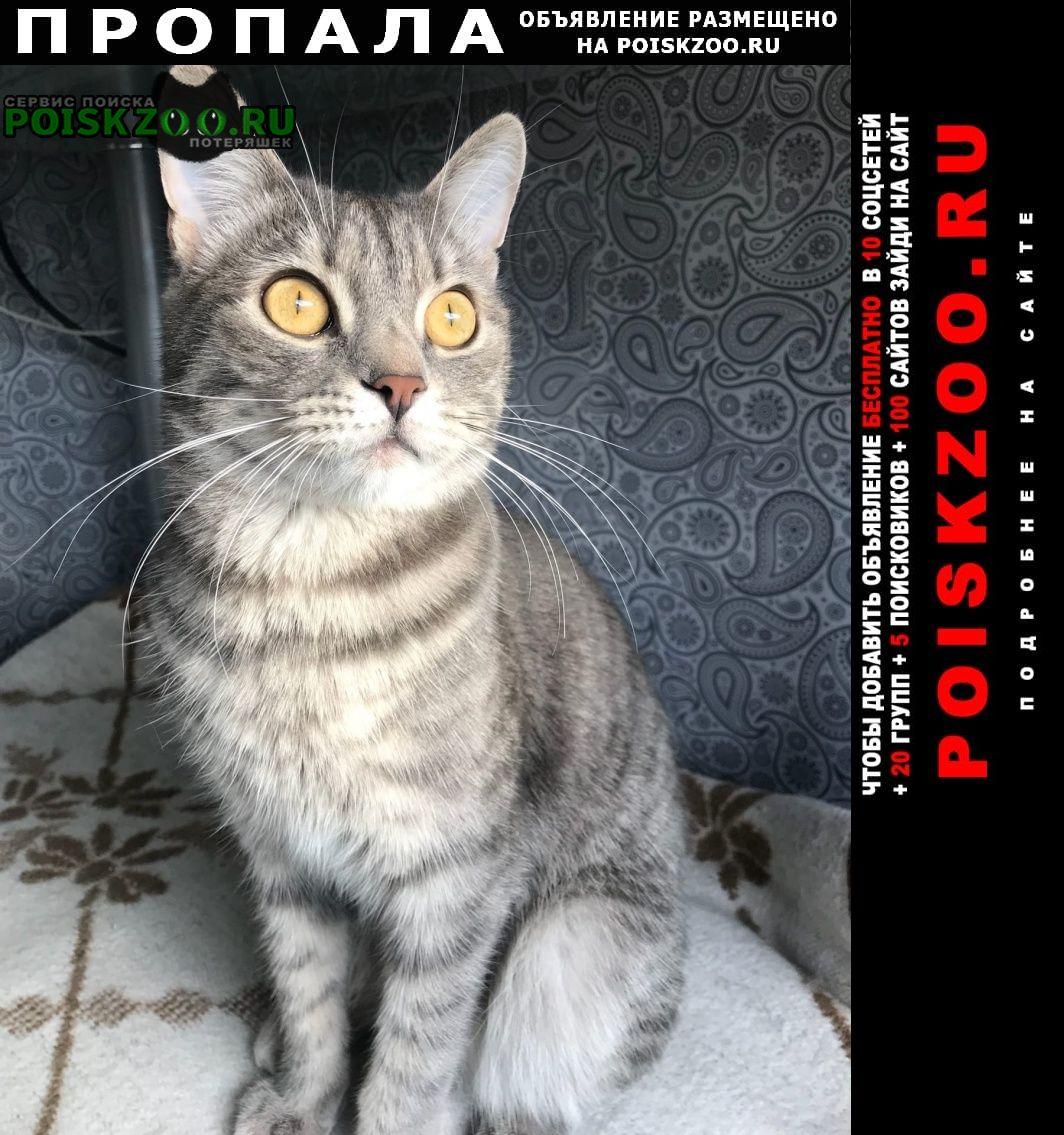 Пропала кошка котик юмашево Севастополь