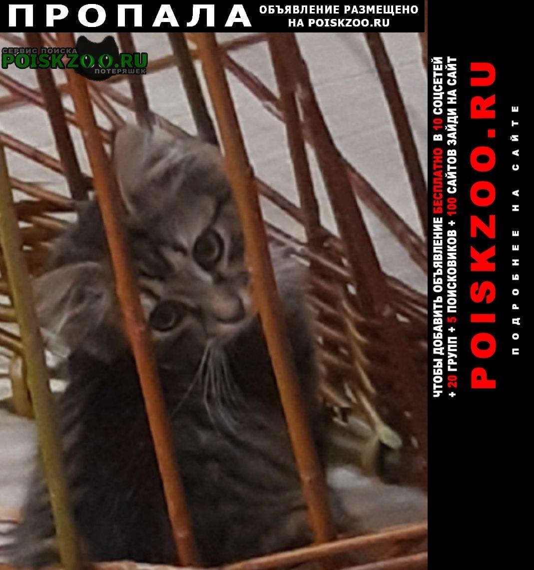 Пропала кошка помогите найти Бор