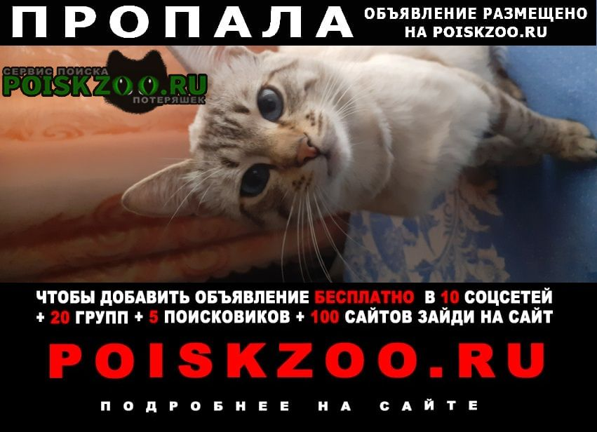 Пропала кошка Узловая