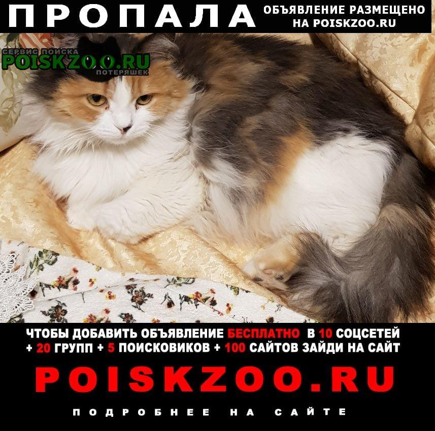 Пропала кошка Уфа