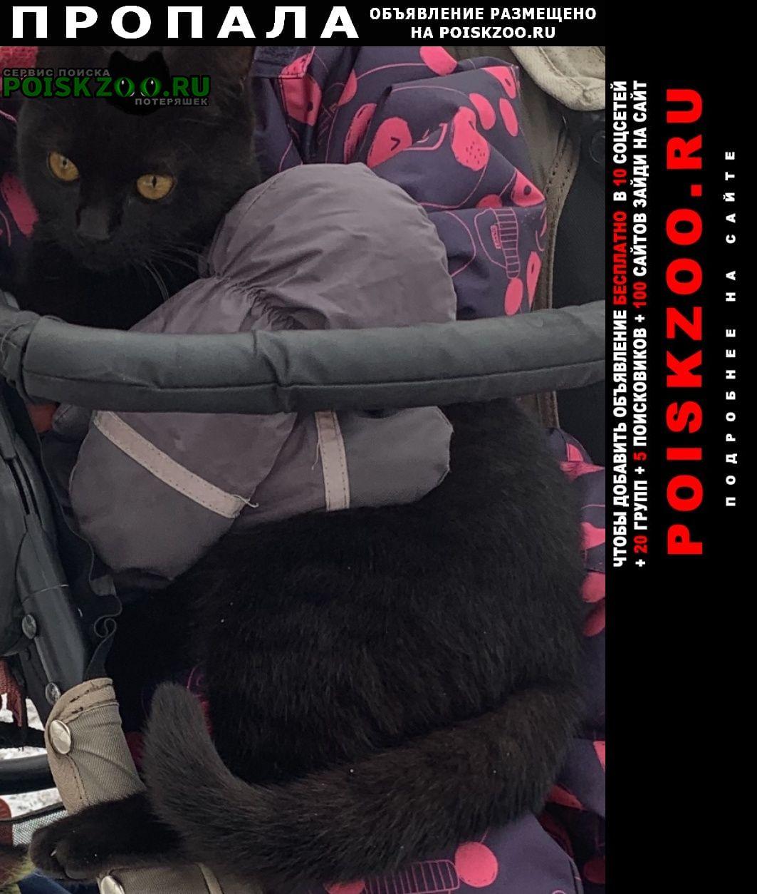 Пропала кошка Химки