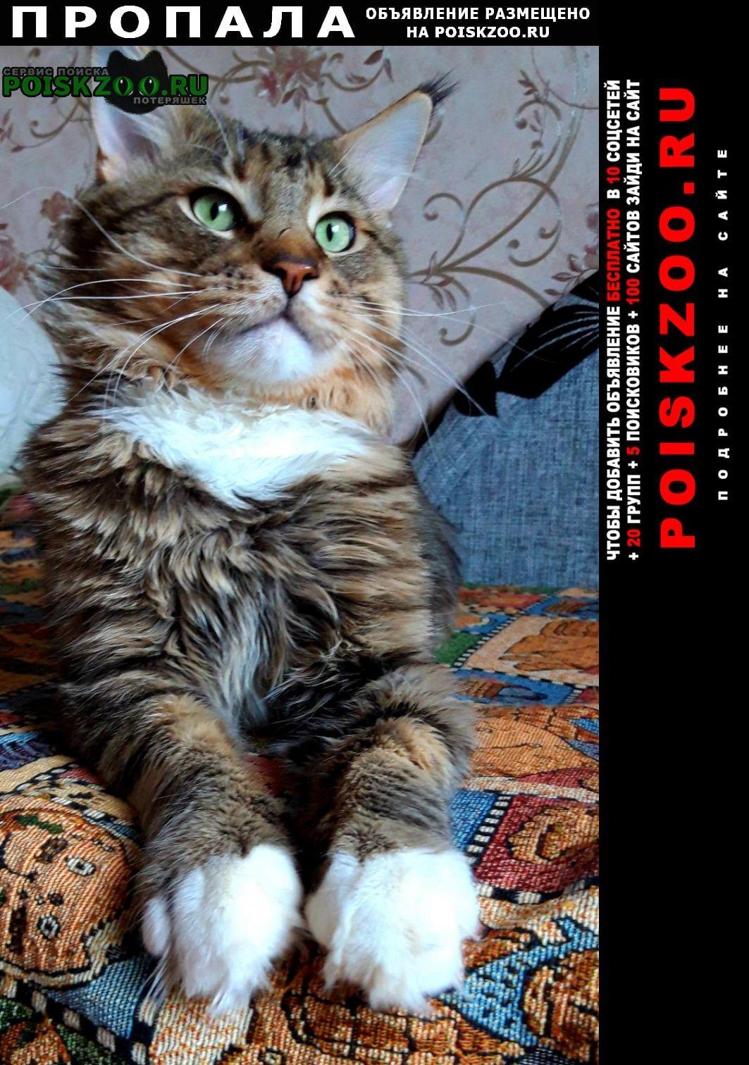 Пропала кошка кот Тюмень