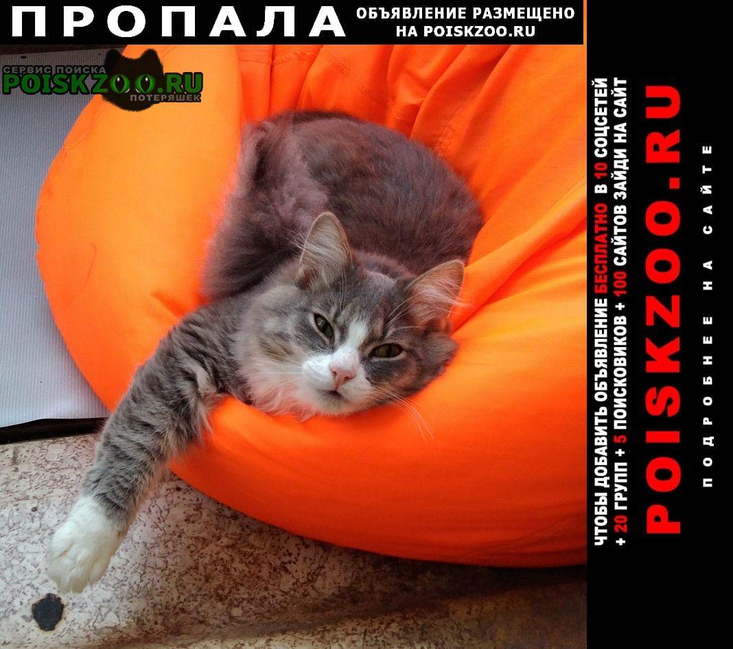 Пропала кошка котик Ревда (Свердловская обл.)