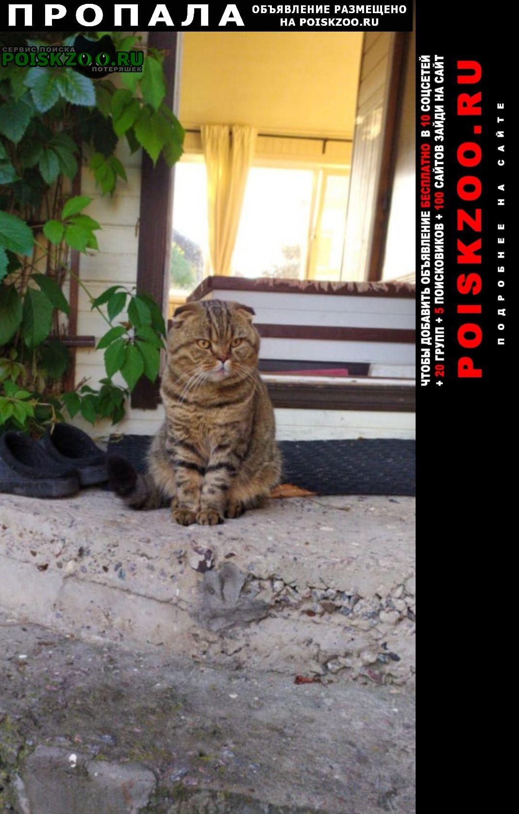 Пропала кошка кот. Конаково