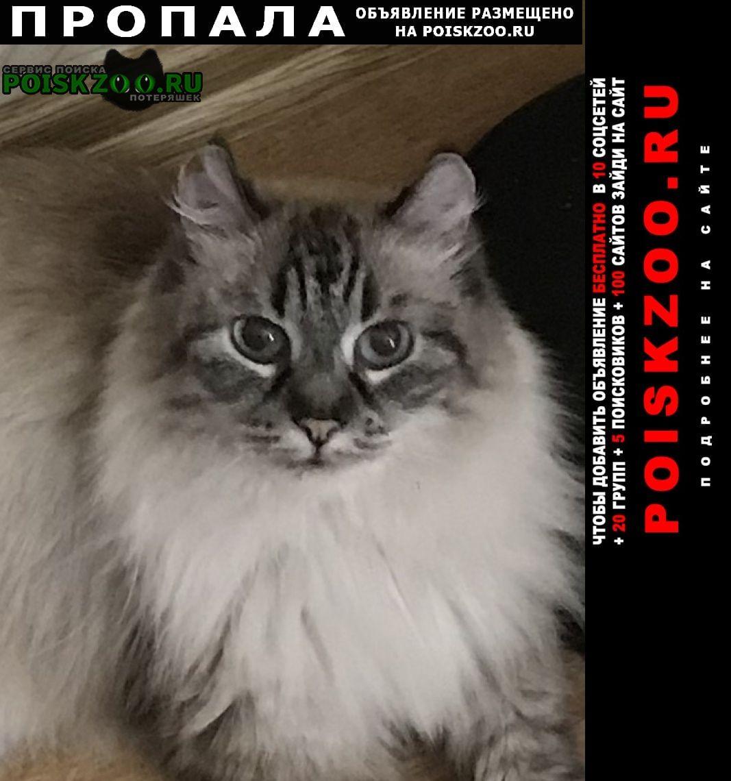 Пропала кошка помогите найти, за вознаграждение Казань