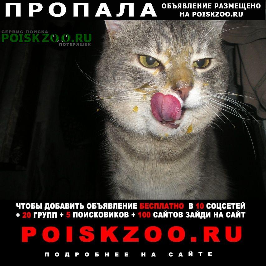 Пропала кошка кот, кличка нафаня, 3 года Самара