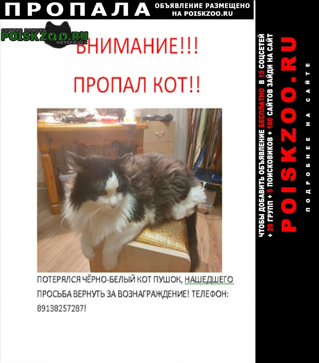 Пропала кошка  кот Ханты-Мансийск