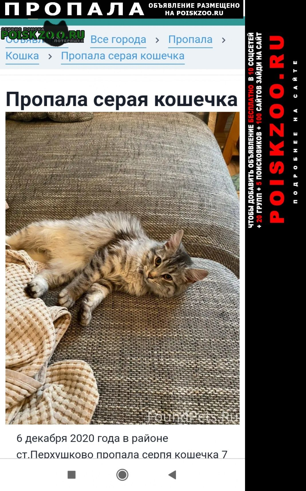 Пропала кошка 6 декабря Одинцово
