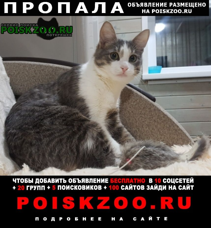 Пропала кошка молодой кот Красногорск