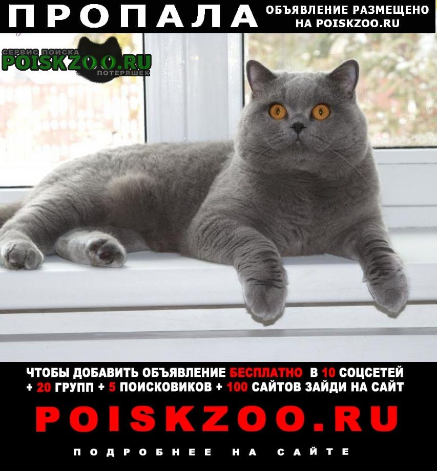 Пропала кошка шотланский кот Изобильный