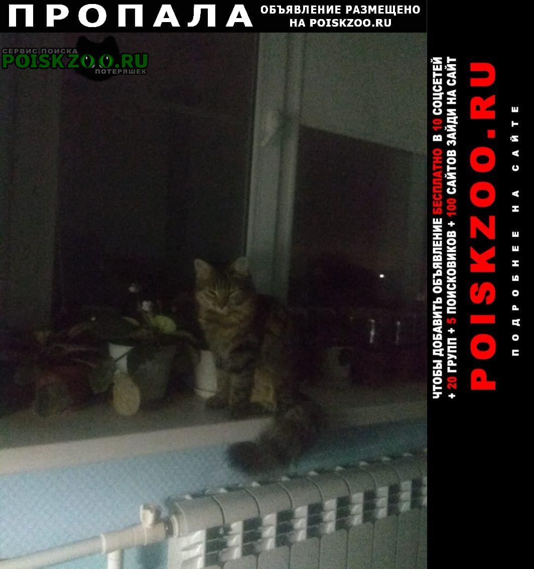 Пропала кошка прошу сообщить, если нашли или приютили Батайск