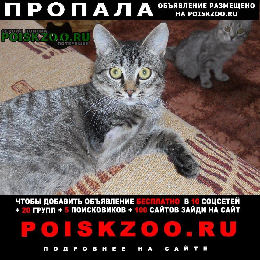 Пропала кошка котик-инвалид Волгоград