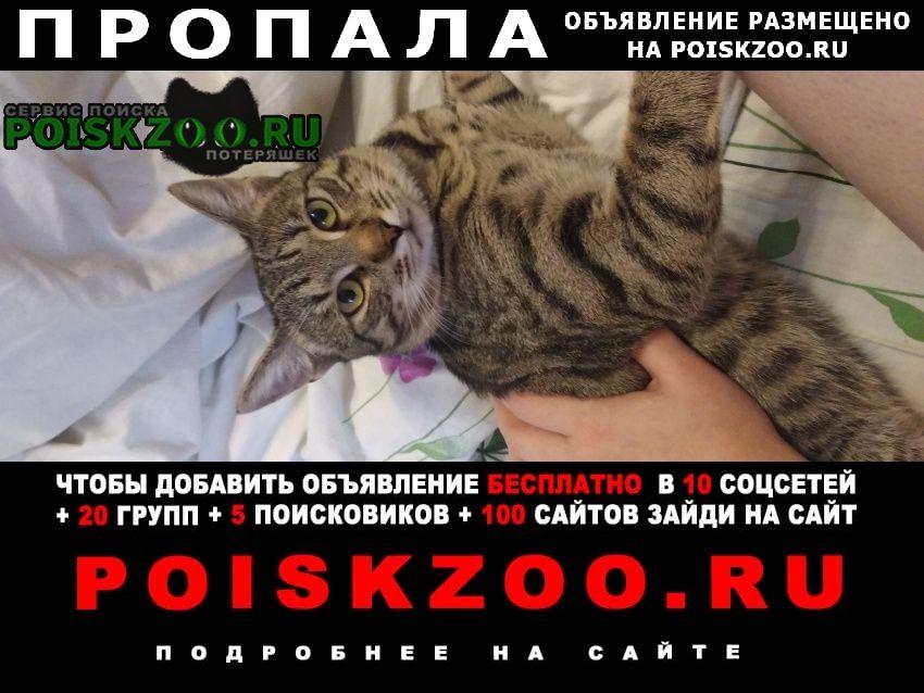 Пропала кошка кот(((( Красногорск