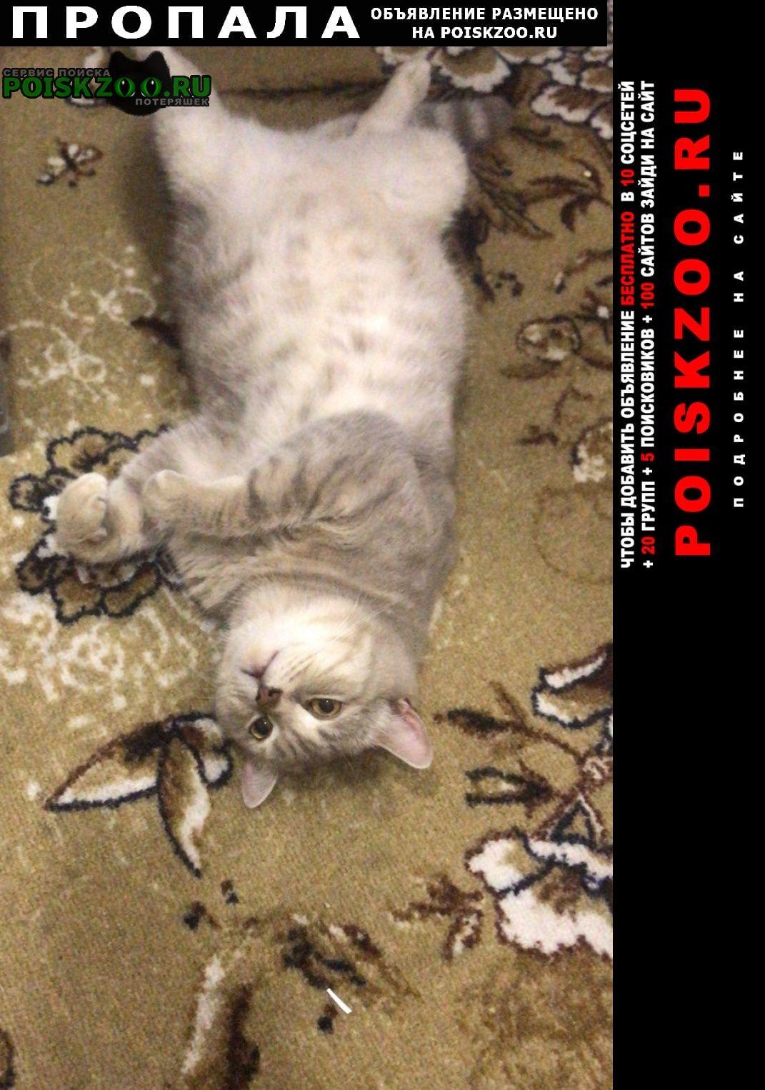 Пропала кошка котик  Геленджик