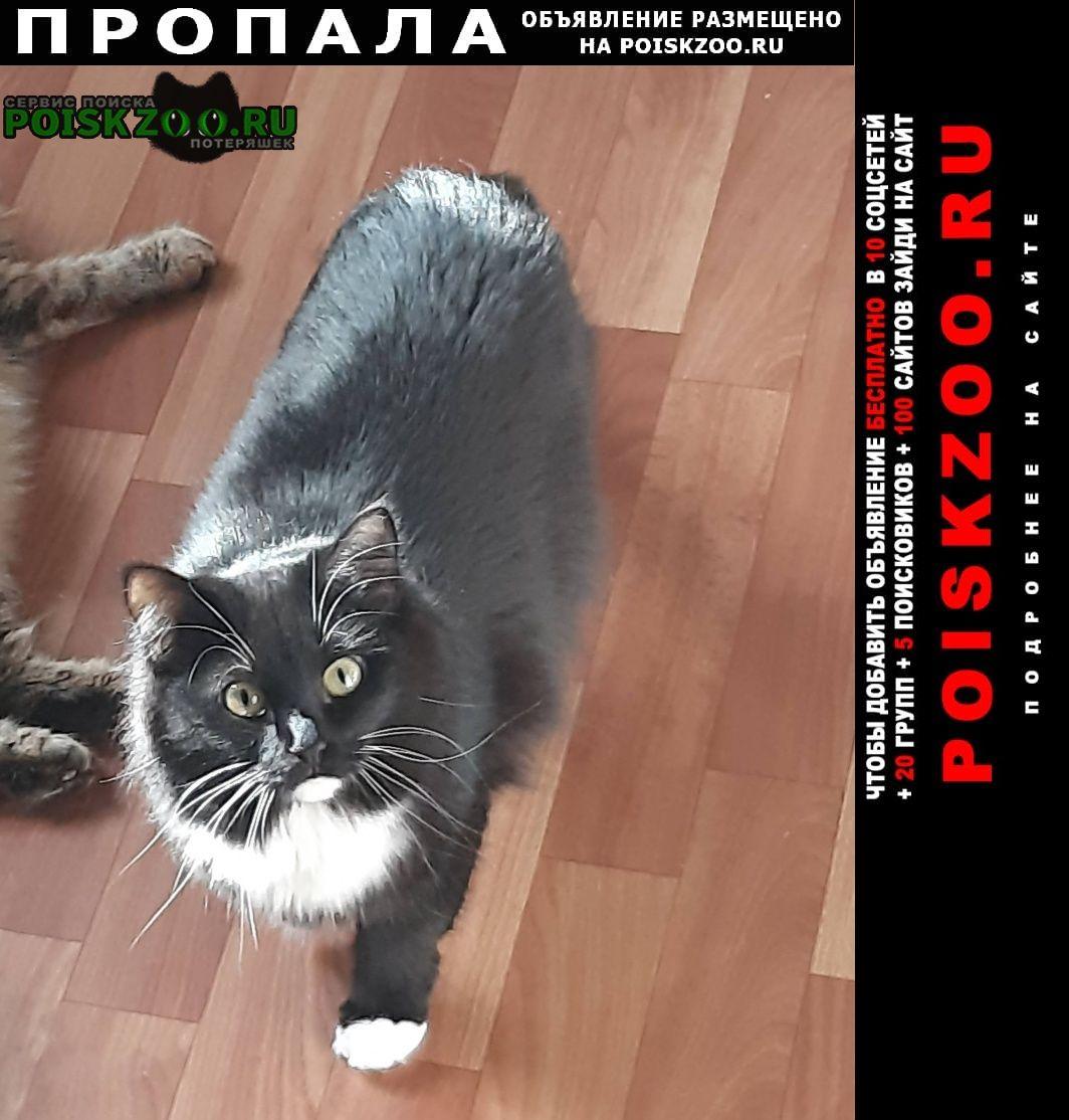 Пропала кошка в районе ул.блюхера 67. Екатеринбург