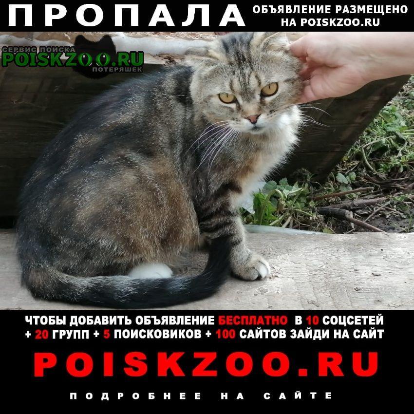 Пропала кошка кот Владимир
