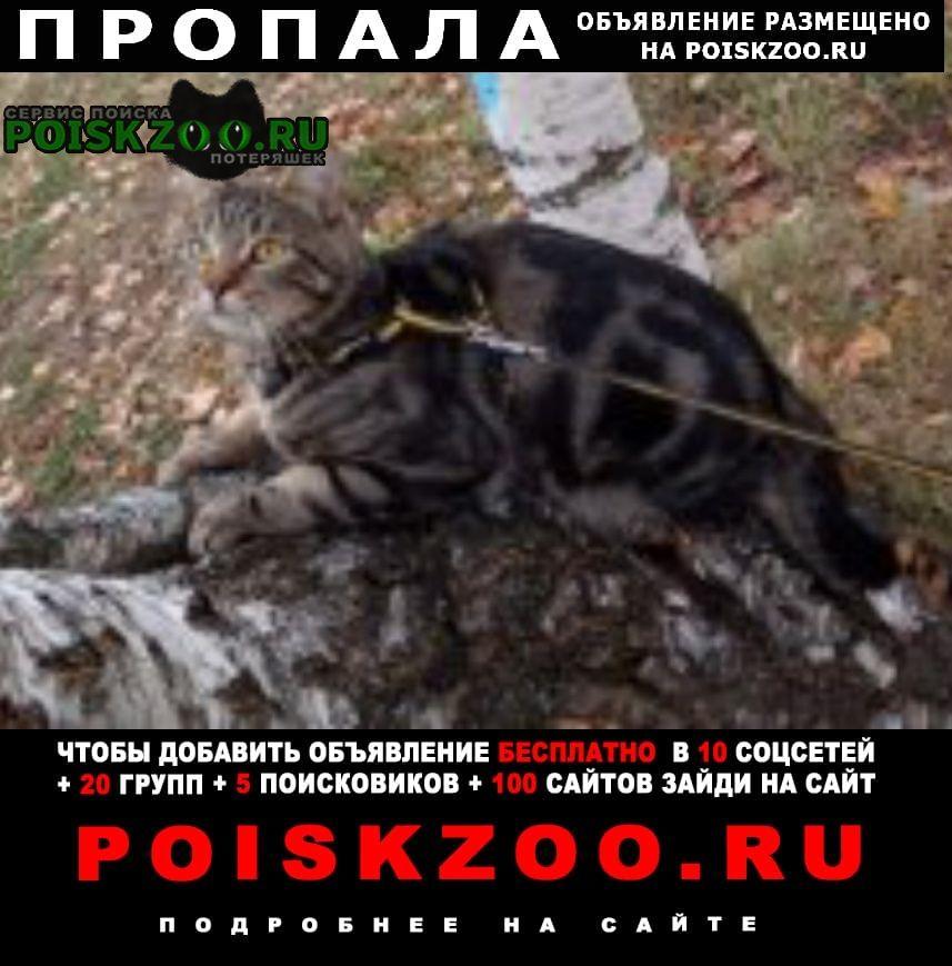 Пропала кошка помогите найти кота Москва