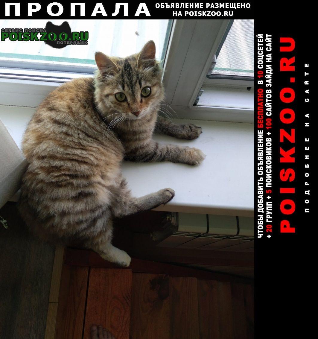 Пропала кошка Черногорск Хакасия