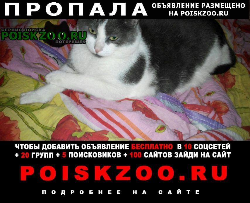Пропала кошка Тосно