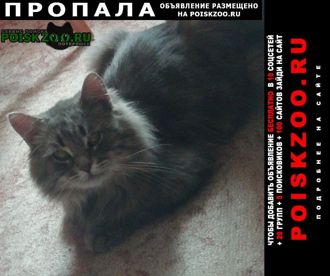 Пропала кошка Обнинск