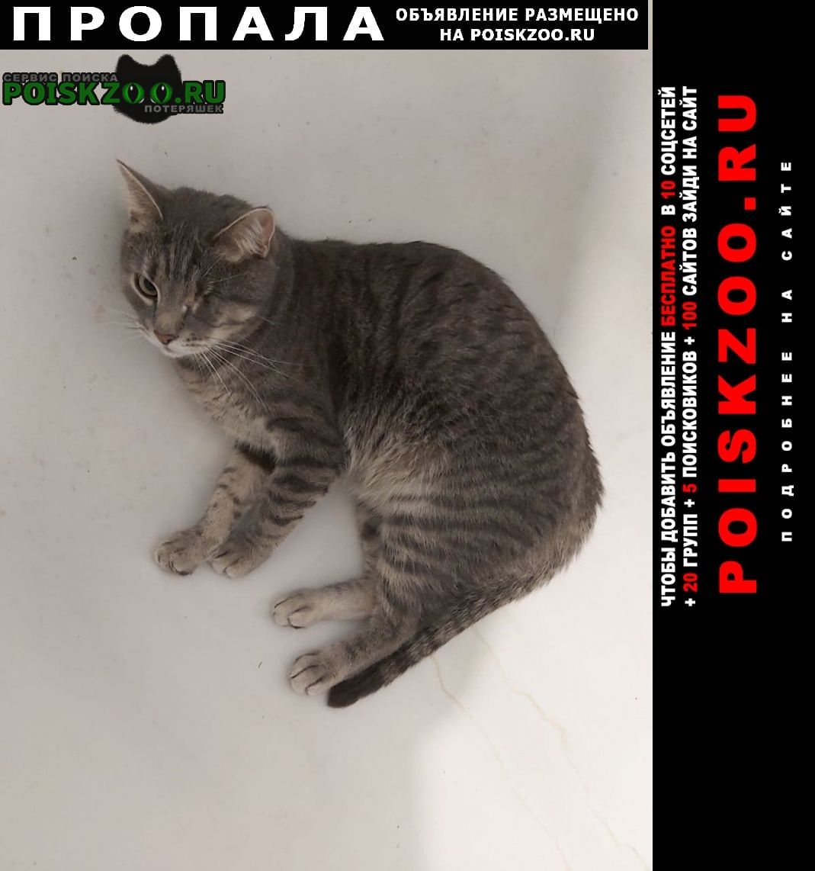 Пропала кошка сбежал кот кличка гератльт Москва