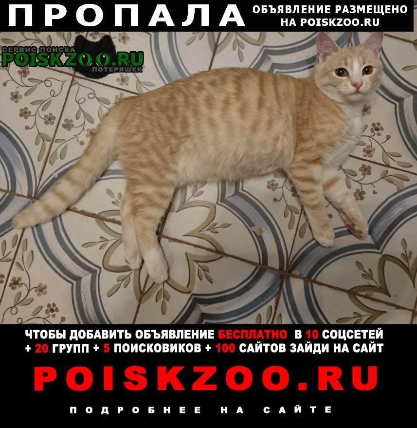 Пропала кошка котик подросток Малаховка