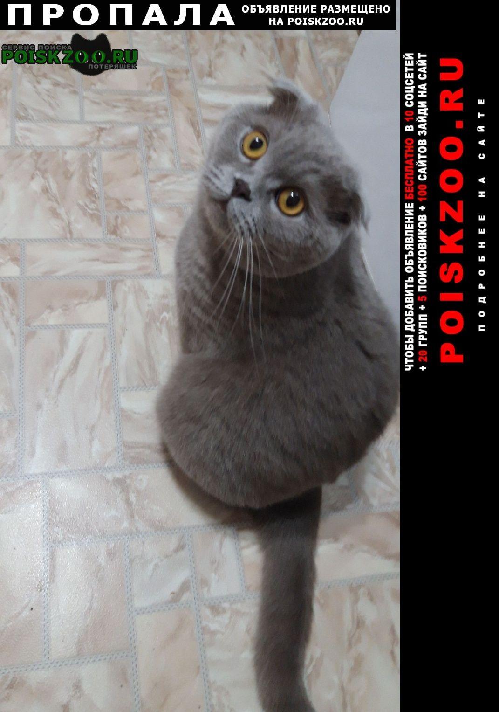 Пропала кошка кот  алма-атинская 3к2 Москва