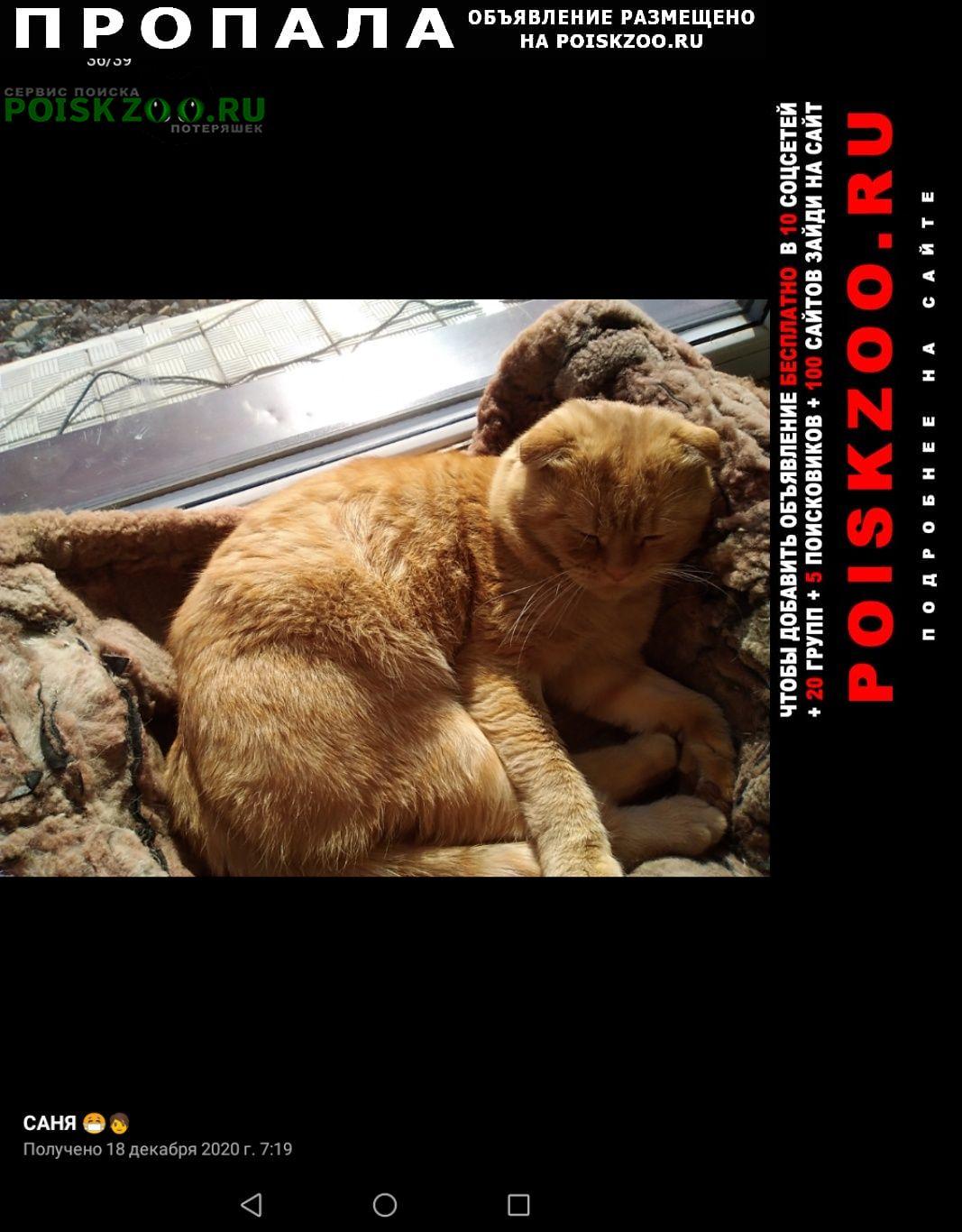 Пропала кошка рыжий вислоухий кот Оренбург