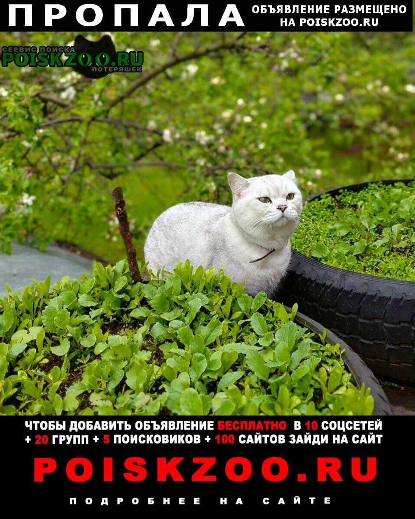 Пропала кошка кот-британец Москва