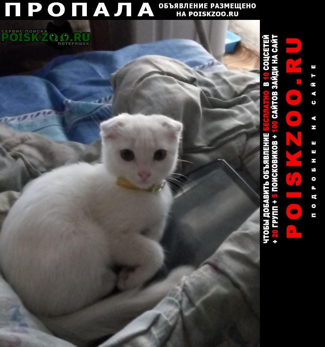 Пропала кошка кот. Курган