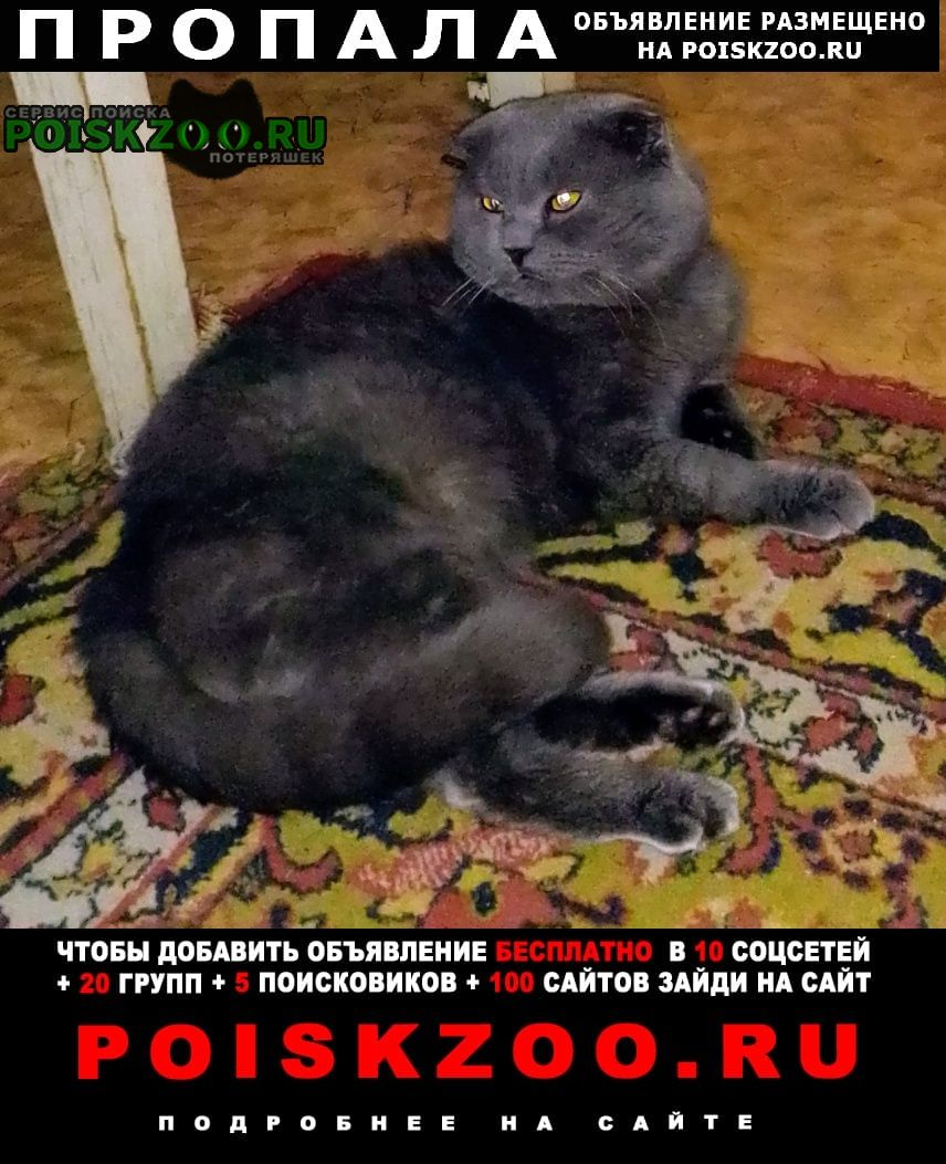 Пропала кошка кот Новочеркасск