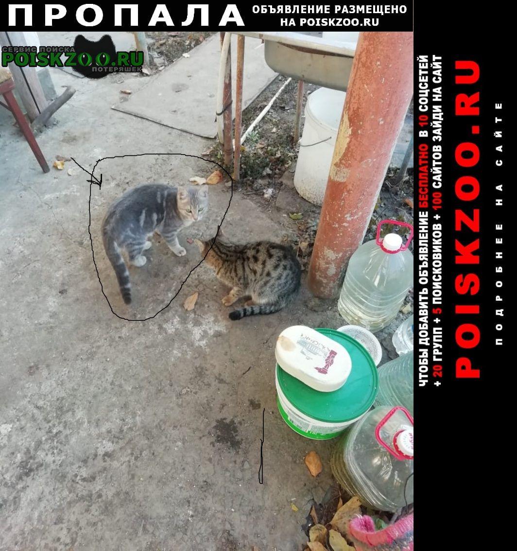 Пропала кошка котик 4 месяца Волгодонск