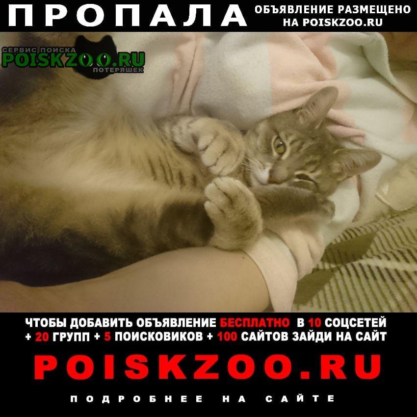 Пропала кошка Петушки