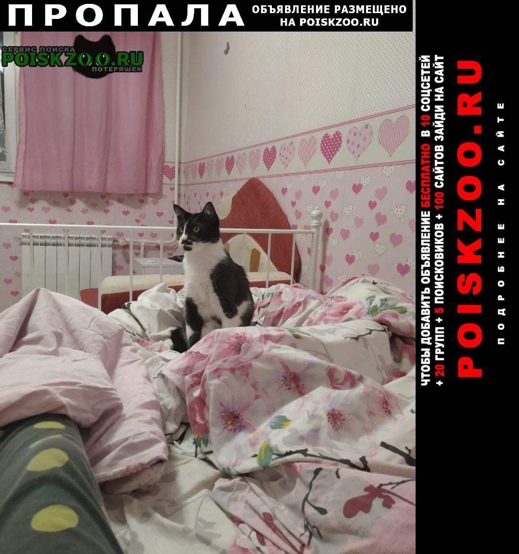 Пропала кошка потеряли кота Ломоносов