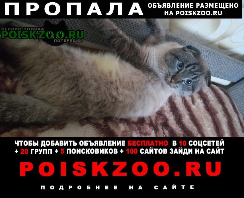 Пропала кошка кот на даргоре Волгоград