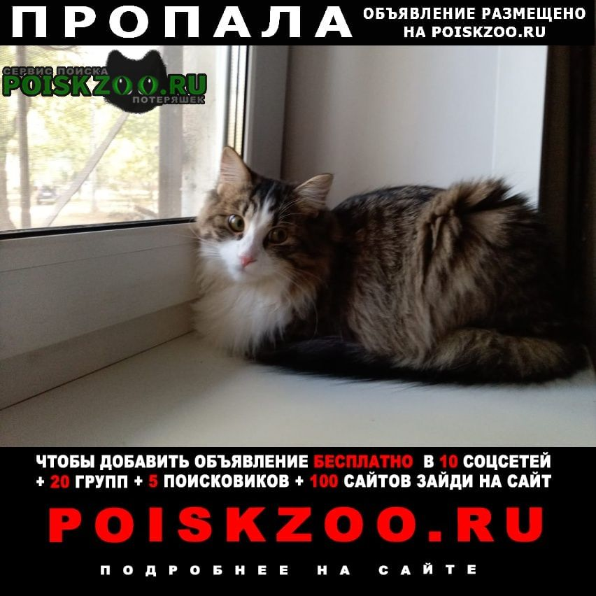 Пропала кошка.. Воронеж