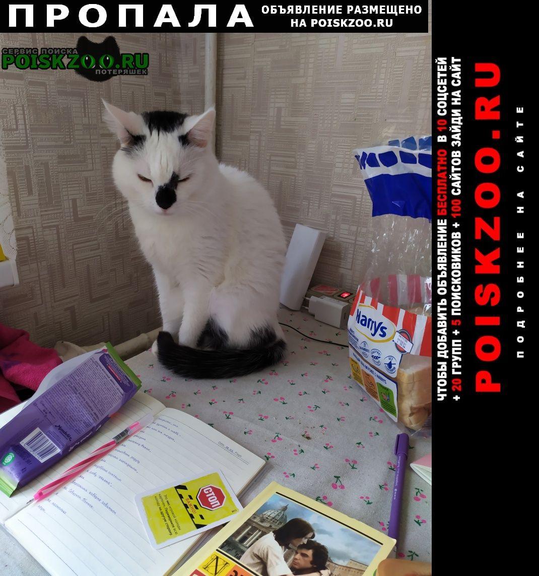 Пропала кошка черно-белый кот Уфа