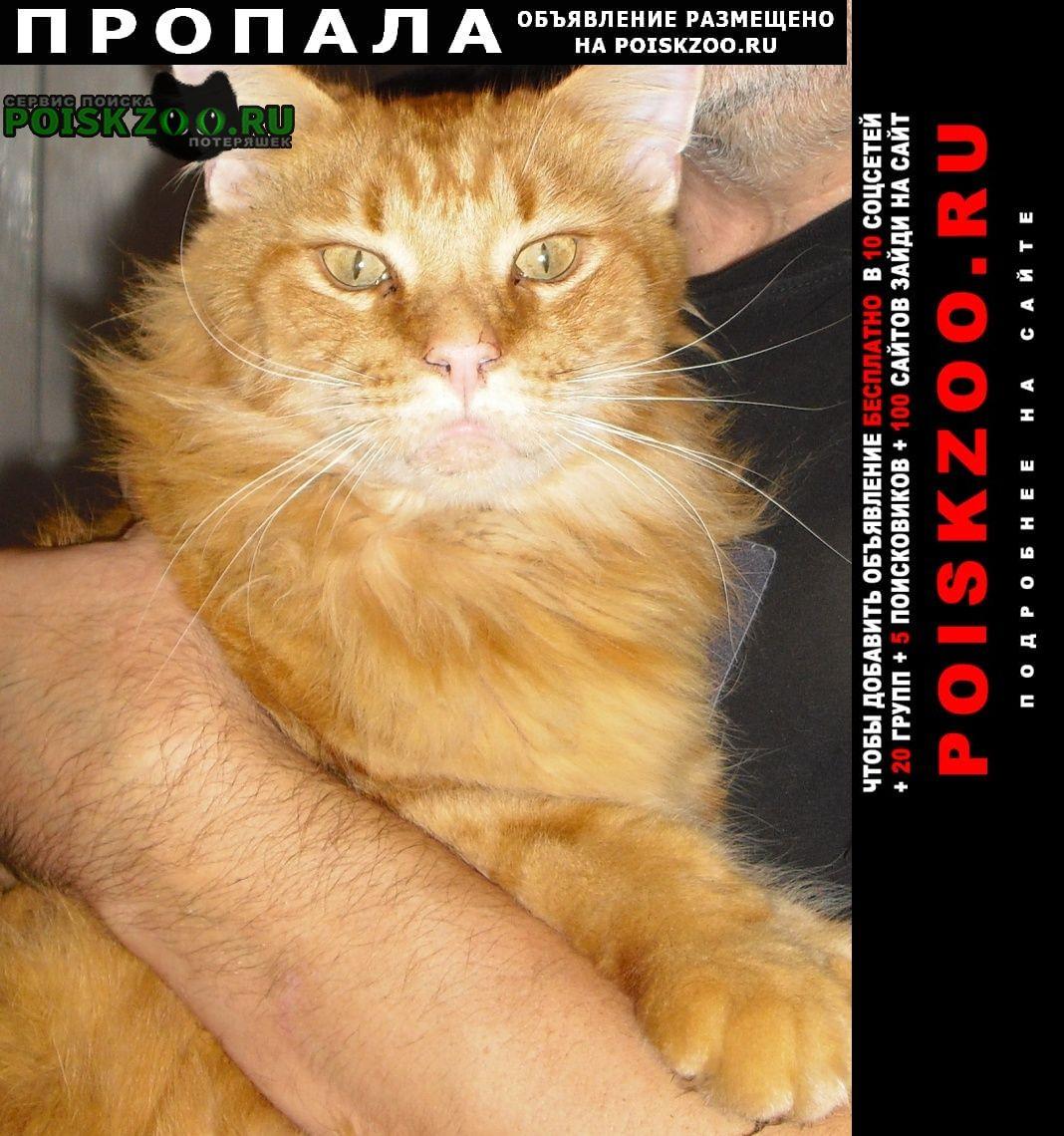 Пропала кошка большой рыжий кот Воронеж