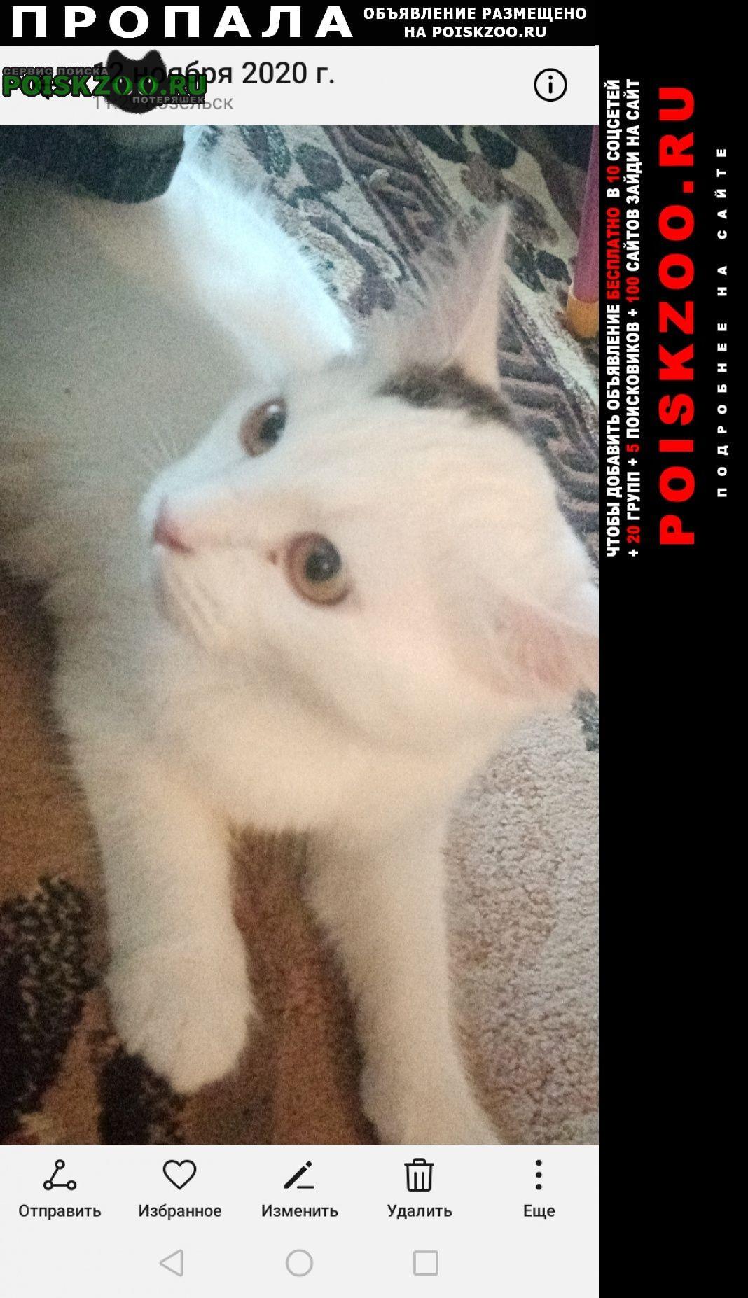 Пропала кошка белая с чёрным пятном на г Козельск