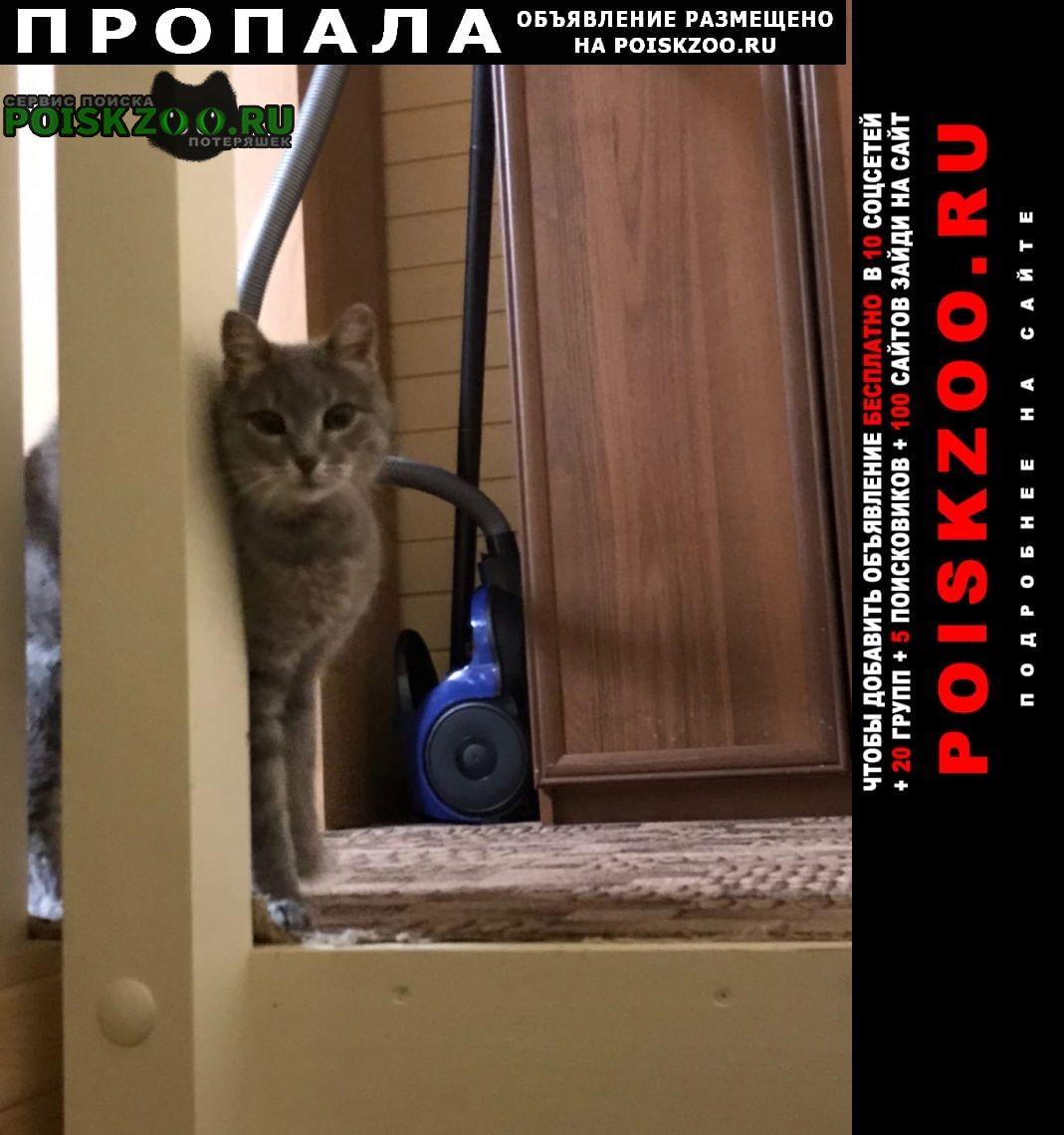 Пропала кошка 30.12 около 14.00 снт поднятая целина Жуковский