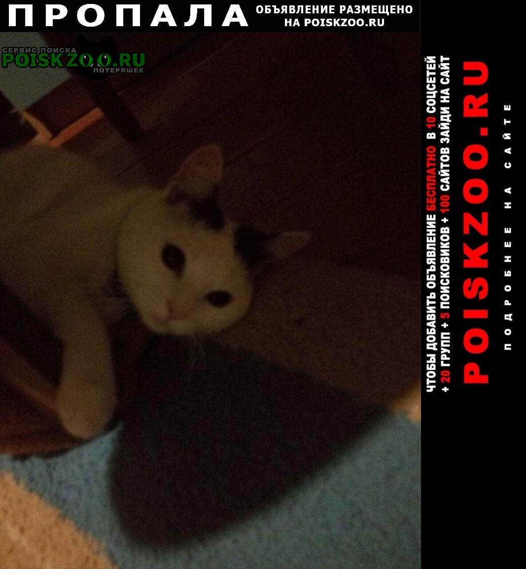 Ужгород Пропала кошка по кличке муся