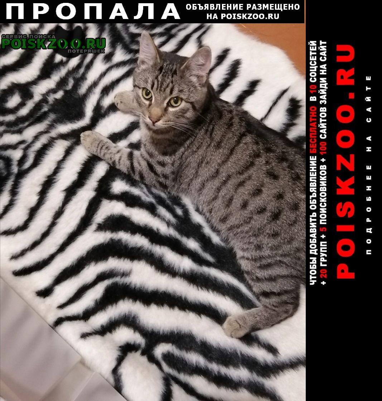 Пропала кошка Кашира
