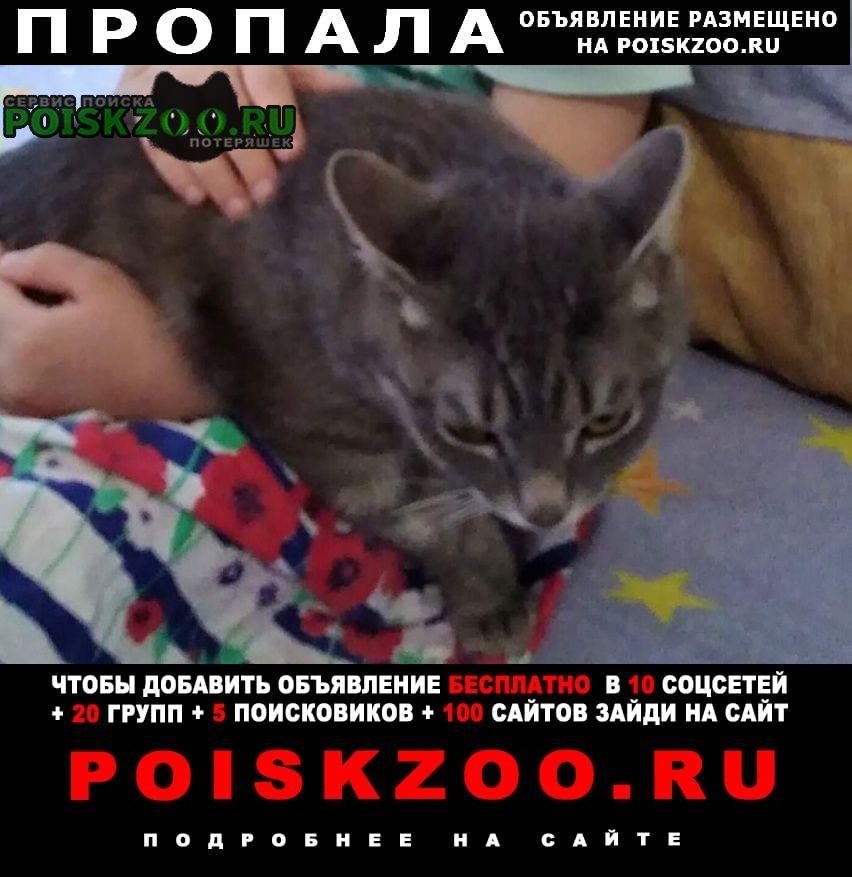 Пропала кошка котик вася Березовский (Свердловская обл.)