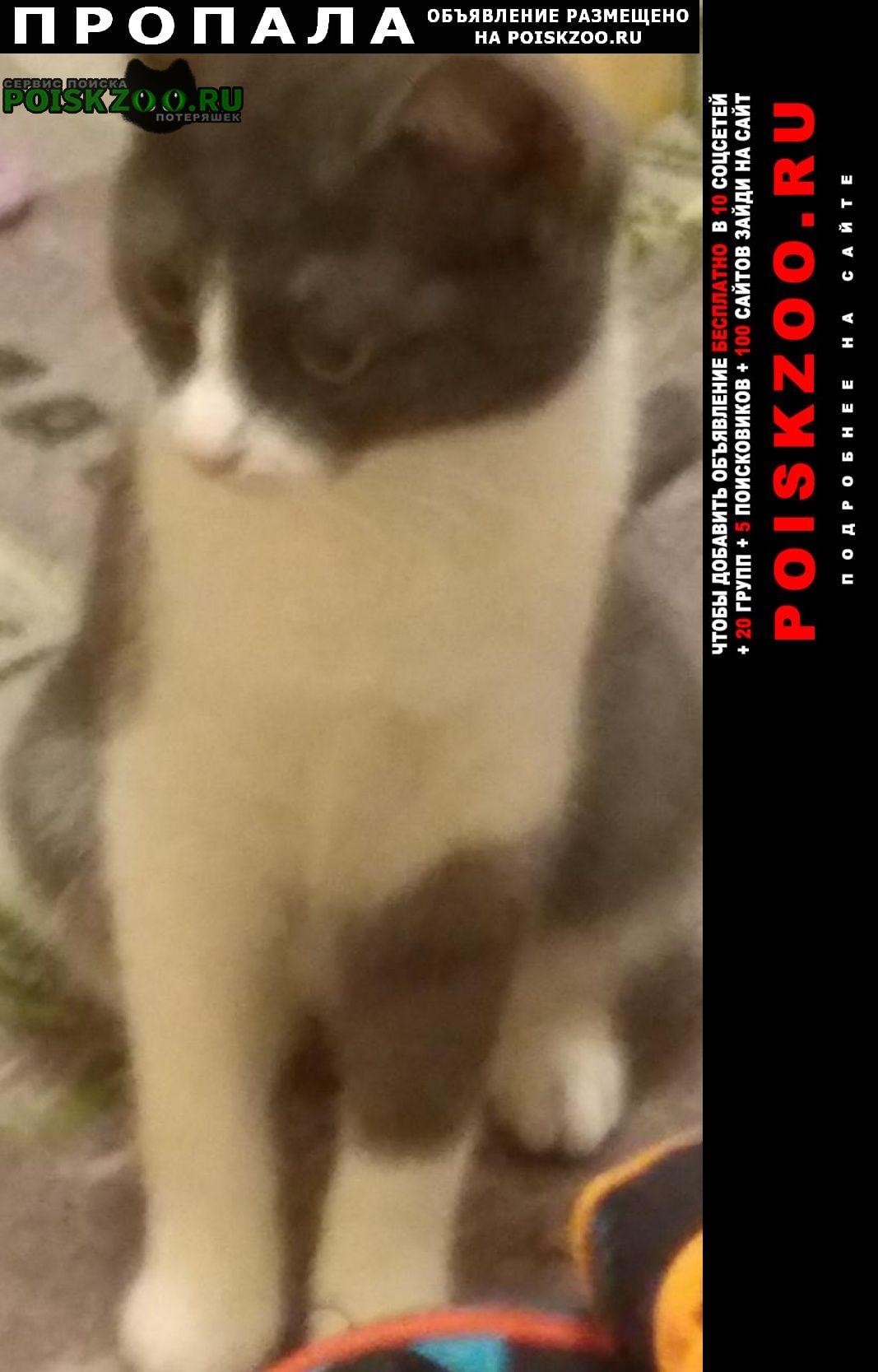 Пропала кошка Коломна