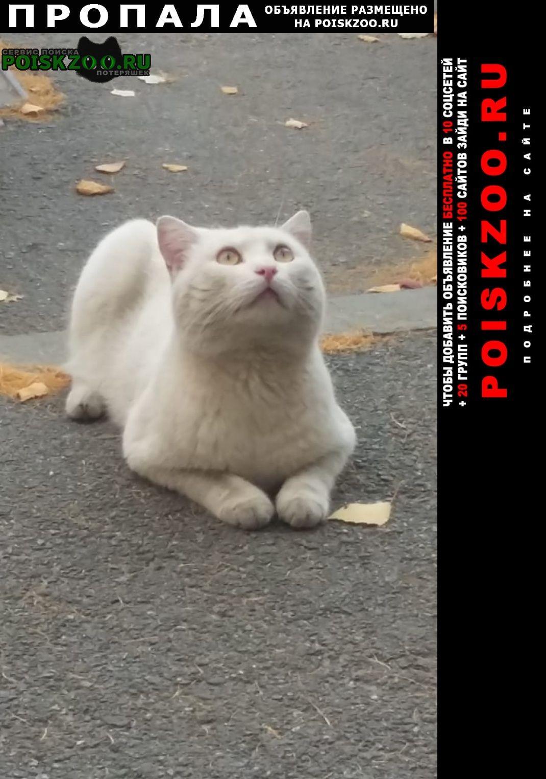 Пропала кошка любимый белый кот Курган